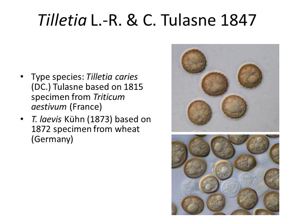Tilletia L.-R. & C.
