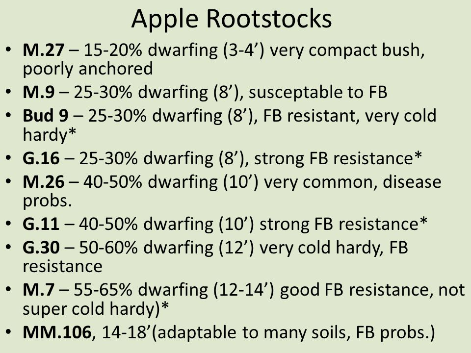 Apple Rootstocks M.27 – 15-20% dwarfing (3-4') very compact bush, poorly anchored M.9 – 25-30% dwarfing (8'), susceptable to FB Bud 9 – 25-30% dwarfin