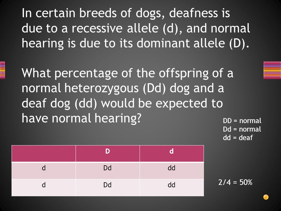 In certain breeds of dogs, deafness is due to a recessive allele (d), and normal hearing is due to its dominant allele (D).