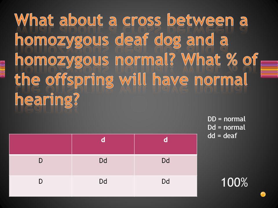 dd DDd D DD = normal Dd = normal dd = deaf 100%