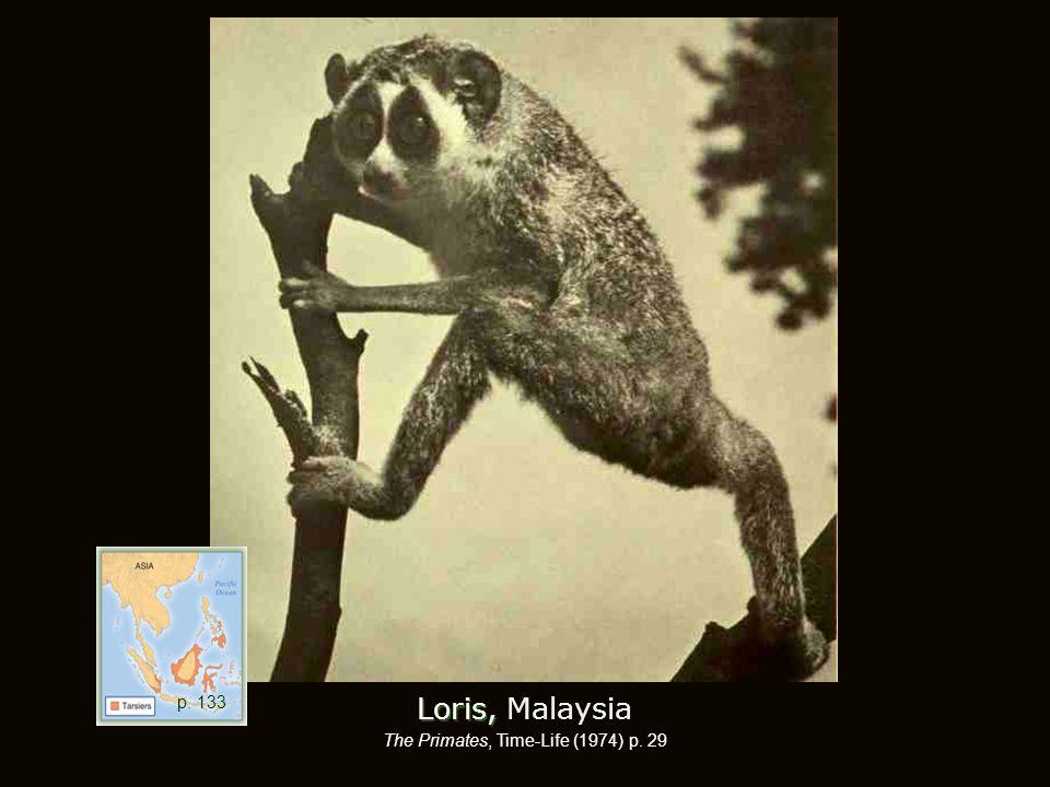 Loris, Loris, Malaysia The Primates, Time-Life (1974) p. 29 p. 133
