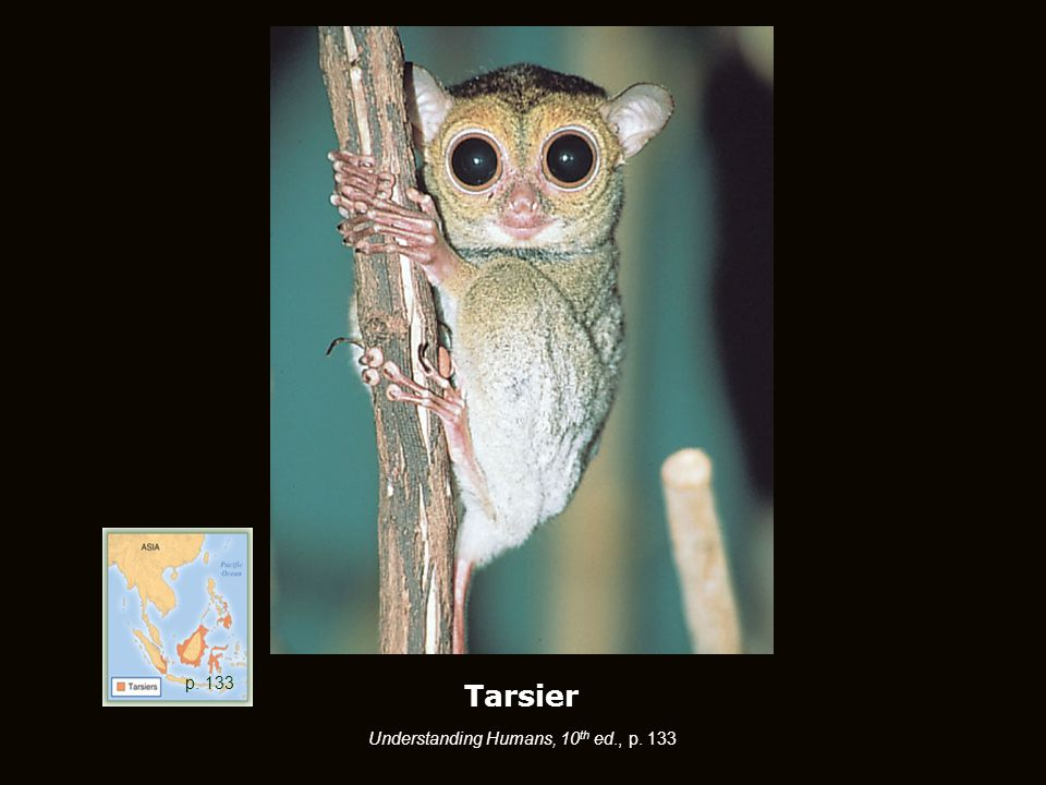 Tarsier Understanding Humans, 10 th ed., p. 133 p. 133