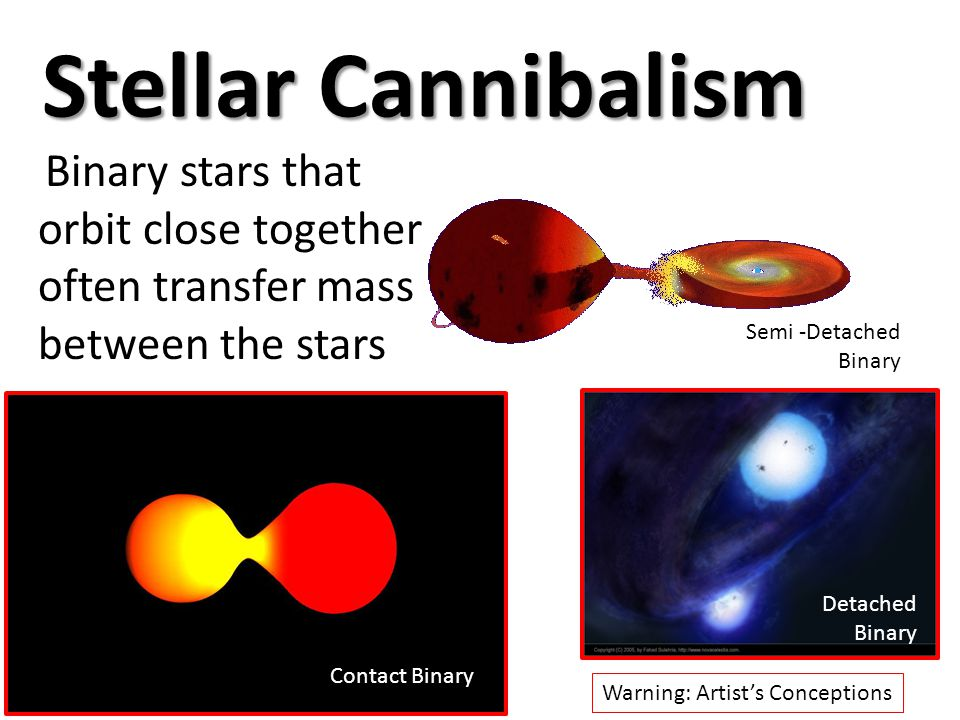 Stellar Cannibalism Binary stars that orbit close together often transfer mass between the stars Warning: Artist's Conceptions Contact Binary Detached