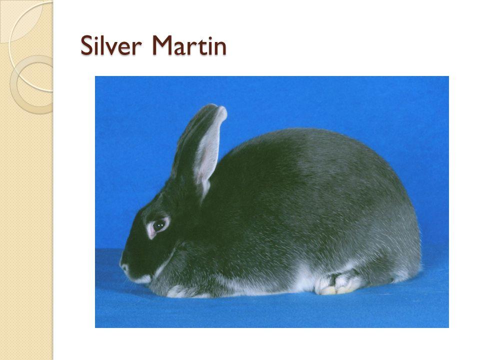 Silver Martin