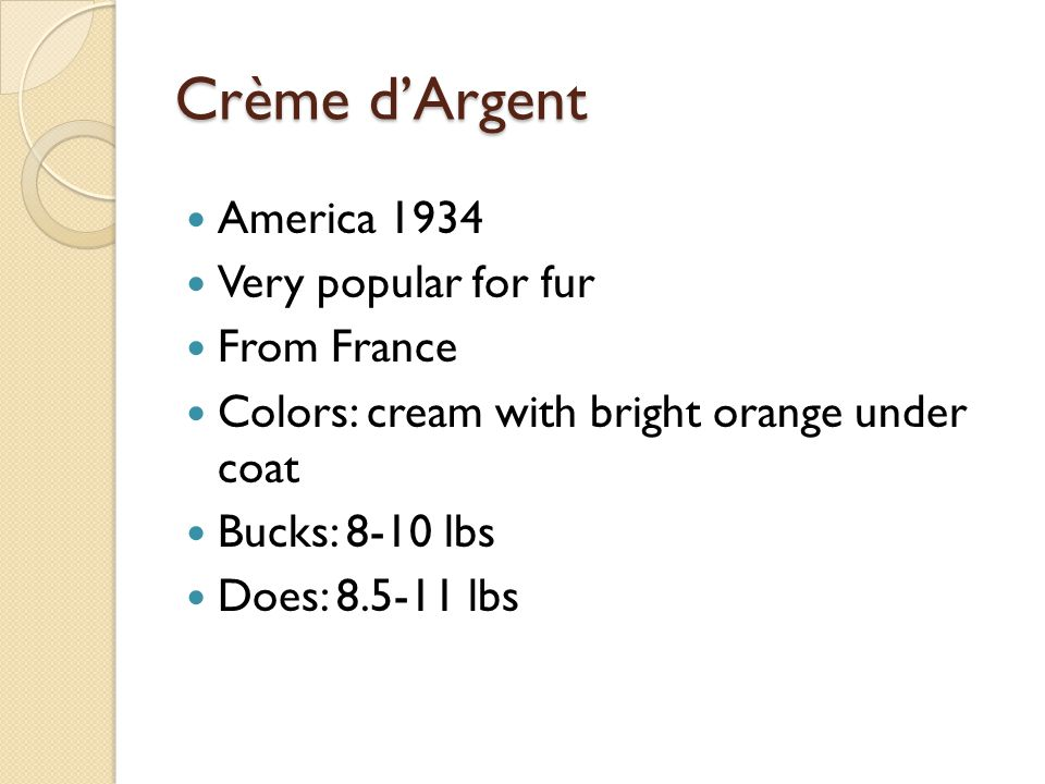 America 1934 Very popular for fur From France Colors: cream with bright orange under coat Bucks: 8-10 lbs Does: 8.5-11 lbs