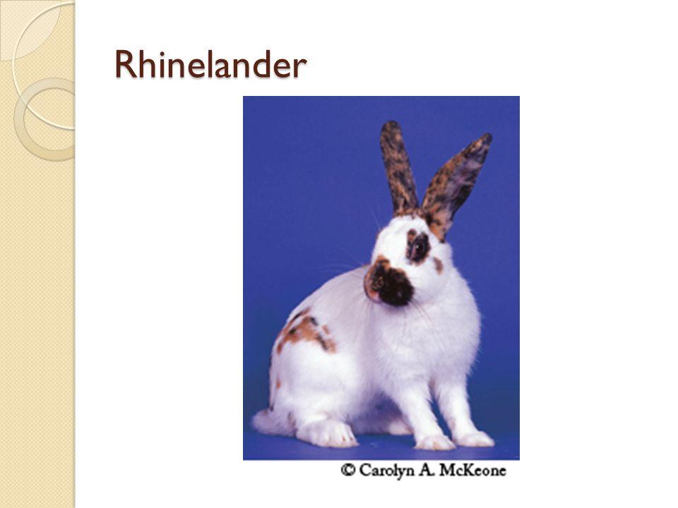 Rhinelander