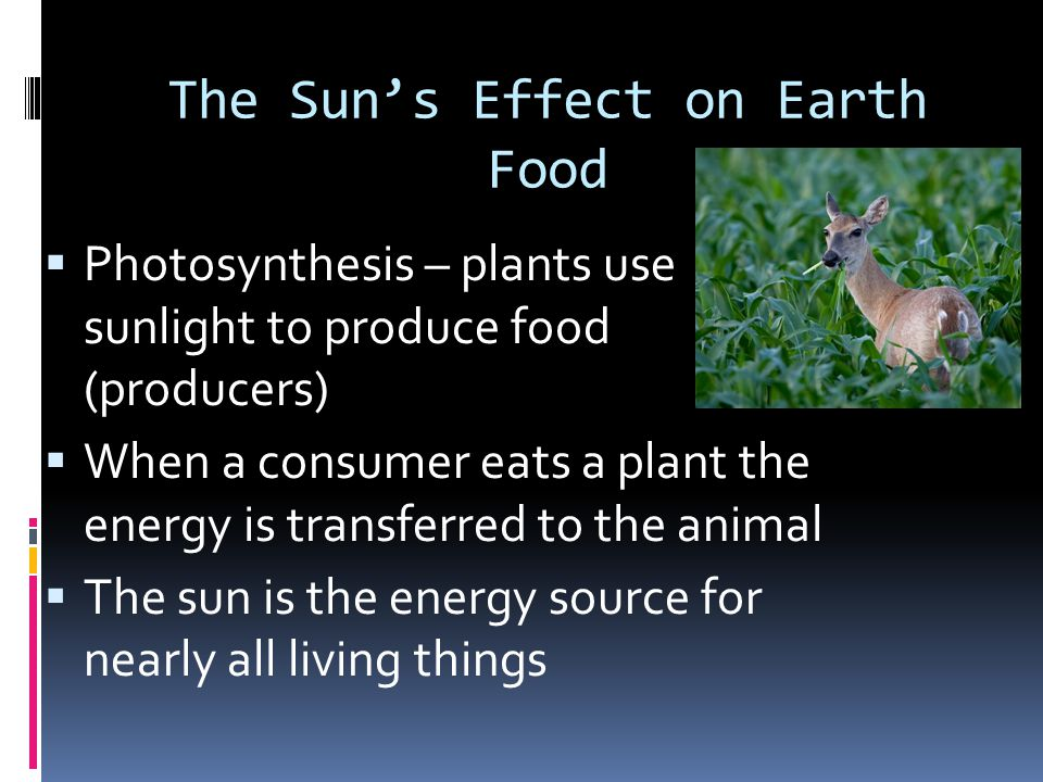 The Sun's Effect on Earth Food  Photosynthesis – plants use sunlight to produce food (producers)  When a consumer eats a plant the energy is transfe