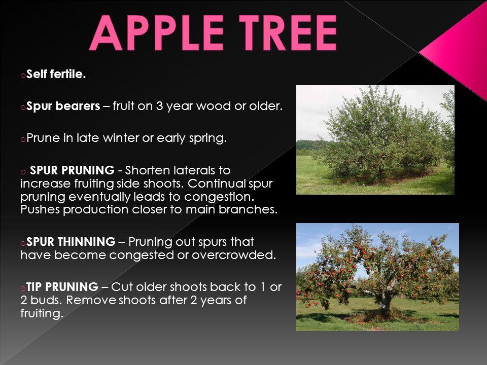 o Self fertile. o Spur bearers – fruit on 3 year wood or older.