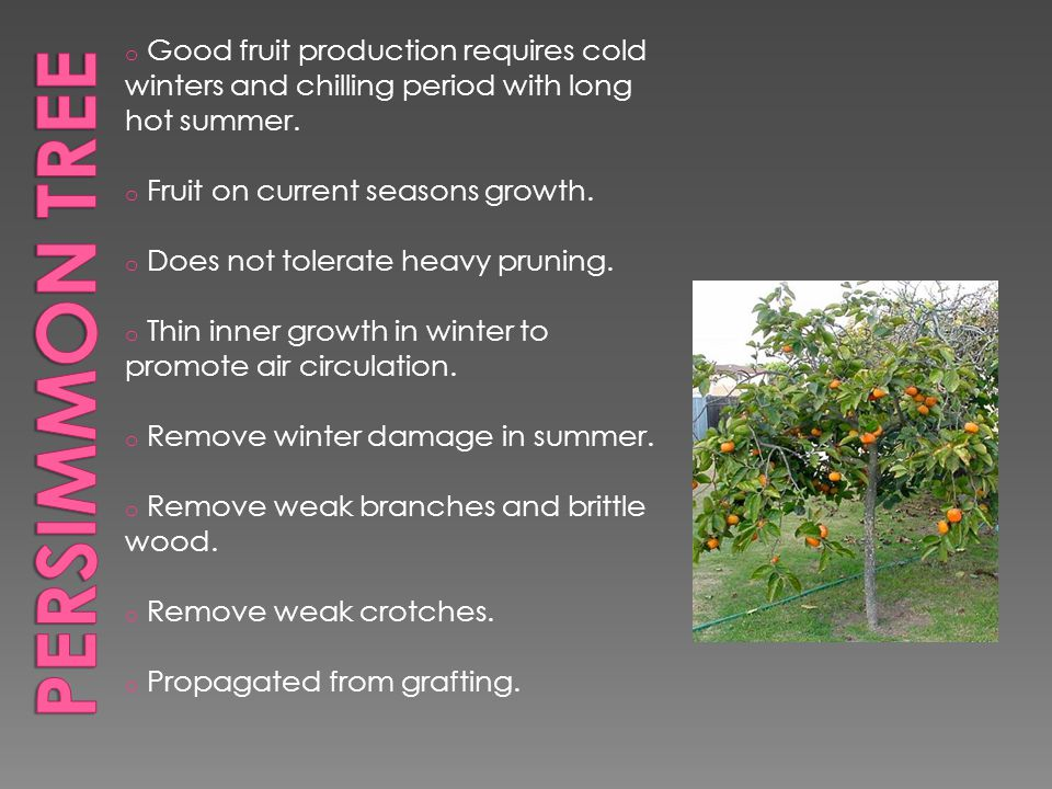 o Good fruit production requires cold winters and chilling period with long hot summer.