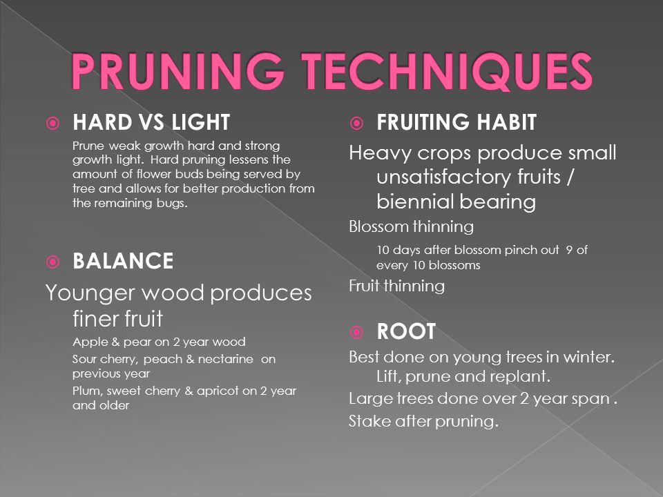  HARD VS LIGHT Prune weak growth hard and strong growth light.