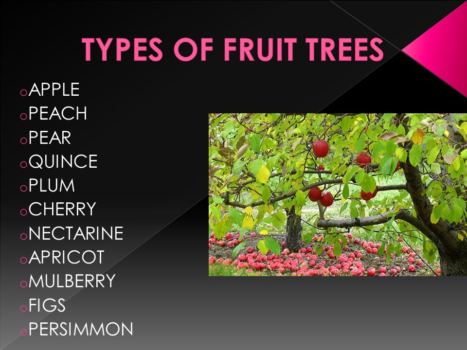 o Self fertile.o Spur bearers – fruit on 3 year wood or older.