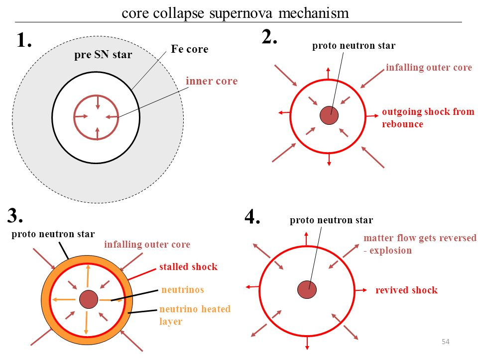54 core collapse supernova mechanism Fe core inner core pre SN star 1. infalling outer core outgoing shock from rebounce proto neutron star 2. infalli