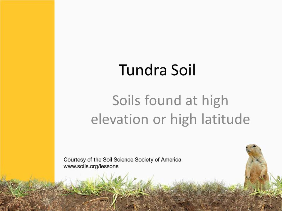 Tundra Soil Soils found at high elevation or high latitude