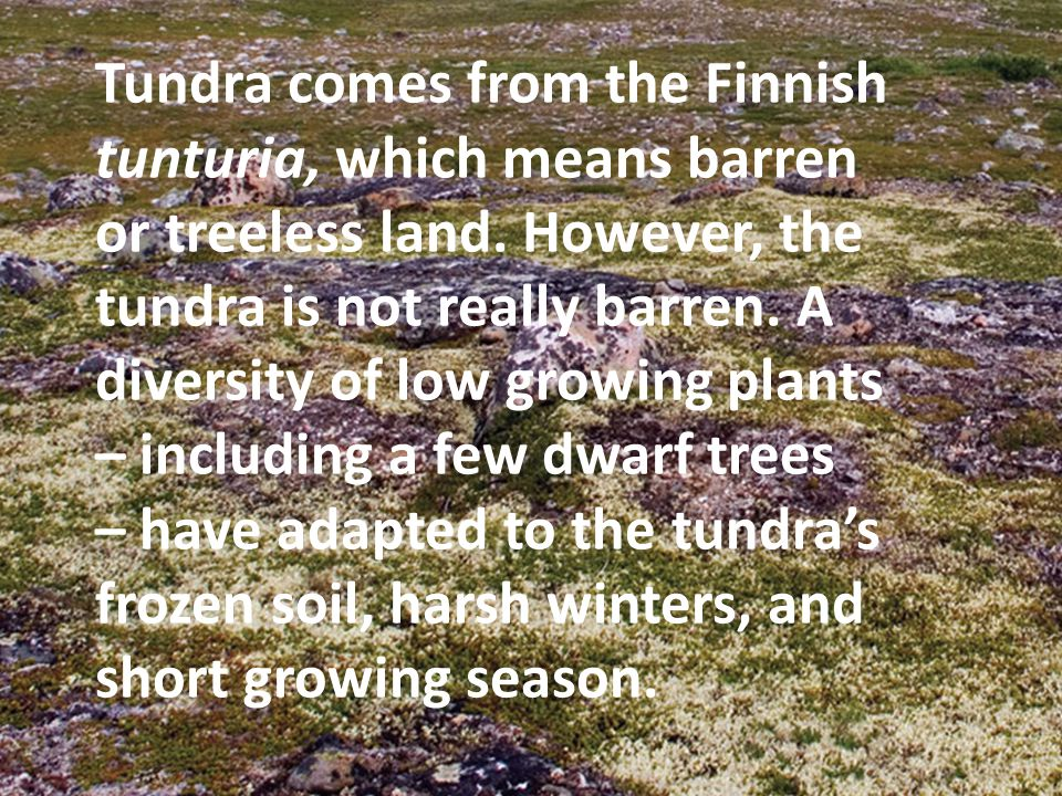 Tundra comes from the Finnish tunturia, which means barren or treeless land.