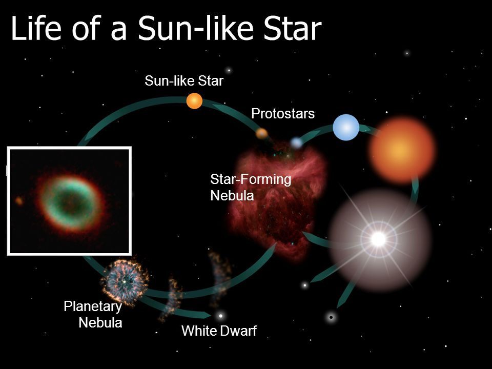 Life of a Sun-like Star Protostars White Dwarf Planetary Nebula Red Giant Sun-like Star Star-Forming Nebula