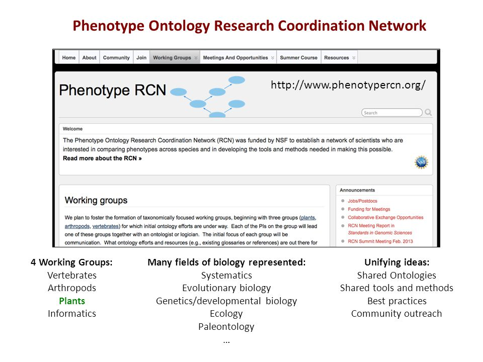 http://www.phenotypercn.org/ 4 Working Groups: Vertebrates Arthropods Plants Informatics Many fields of biology represented: Systematics Evolutionary biology Genetics/developmental biology Ecology Paleontology … Phenotype Ontology Research Coordination Network Unifying ideas: Shared Ontologies Shared tools and methods Best practices Community outreach