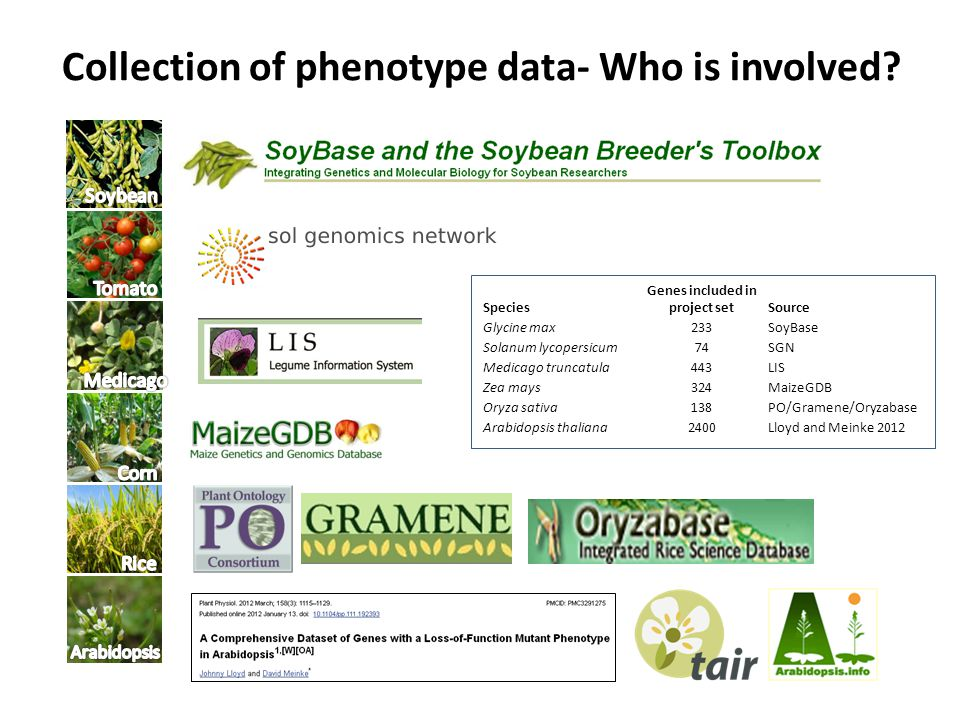 Collection of phenotype data- Who is involved.