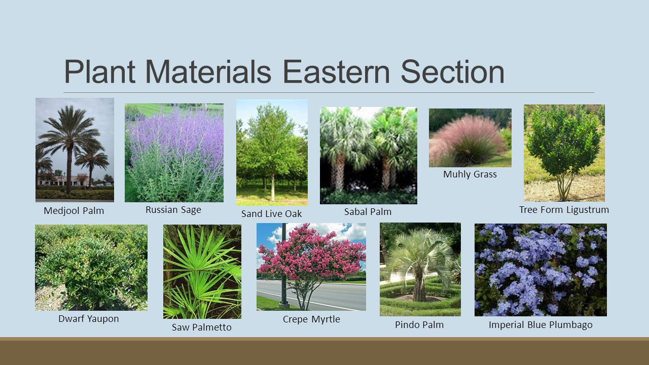 Plant Materials Western Section Saw Cordgrass Sand Live Oak Muhly Grass Saw Palmetto Bermuda Turf Grass (all sections)
