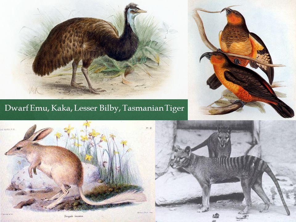 Dwarf Emu, Kaka, Lesser Bilby, Tasmanian Tiger