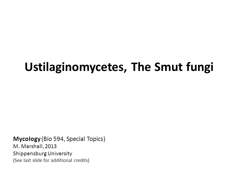 Mycology (Bio 594, Special Topics) M.