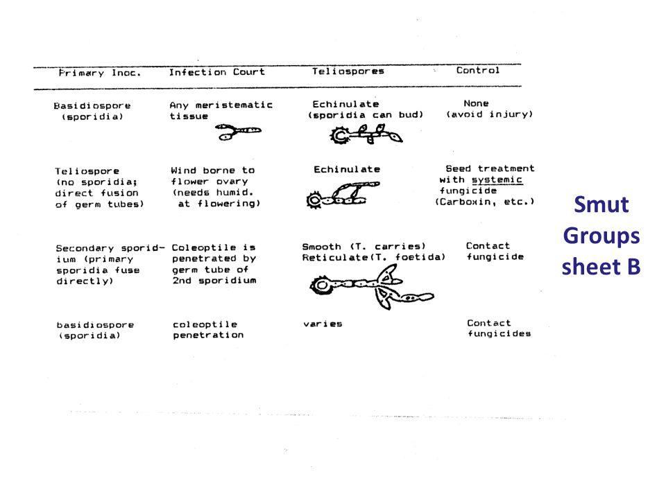 Smut Groups sheet B