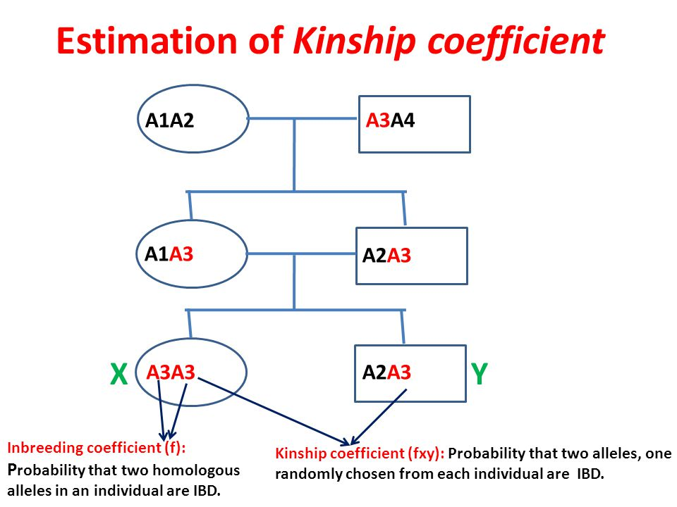 Estimation of Kinship coefficient A1A2 A3A4 A1A3 A2A3 A3A3A2A3 Inbreeding coefficient (f): P robability that two homologous alleles in an individual are IBD.