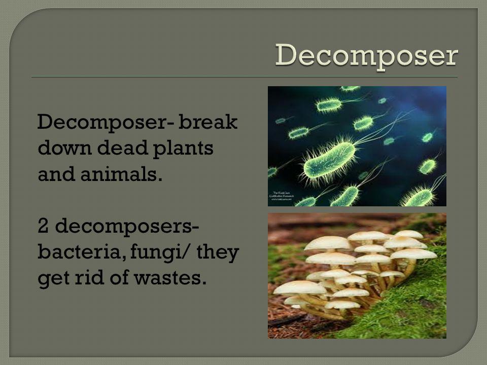 Omnivores Carnivores Herbivores Decomposers Producers