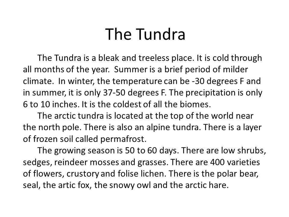 This is a picture of the tundra in the morning.