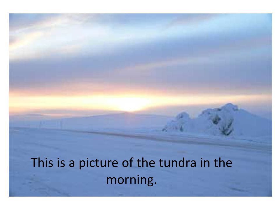 The tundra is a treeless place and it is very cold.