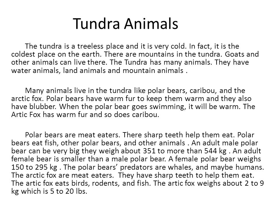 Polar bears have sharp teeth to eat.
