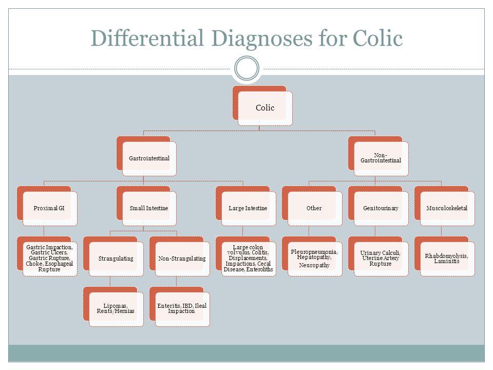 Differential Diagnoses for Colic Colic GastrointestinalProximal GI Gastric Impaction, Gastric Ulcers, Gastric Rupture, Choke, Esophageal Rupture Small IntestineStrangulating Lipomas, Rents/Hernias Non-Strangulating Enteritis, IBD, Ileal Impaction Large Intestine Large colon volvulus, Colitis, Displacements, Impactions, Cecal Disease, Enteroliths Non- Gastrointestinal Other Pleuropneumonia, Hepatopathy, Neuropathy Genitourinary Urinary Calculi, Uterine Artery Rupture Musculoskeletal Rhabdomyolysis, Laminitis