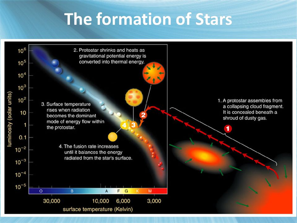 Whereabouts a protostar lands on the main sequence is determined by its initial mass.