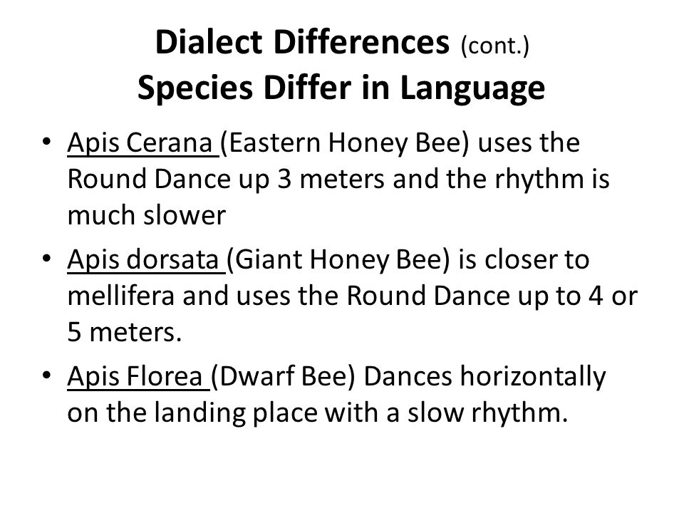 Dialect Differences (cont.) Species Differ in Language Apis Cerana (Eastern Honey Bee) uses the Round Dance up 3 meters and the rhythm is much slower Apis dorsata (Giant Honey Bee) is closer to mellifera and uses the Round Dance up to 4 or 5 meters.
