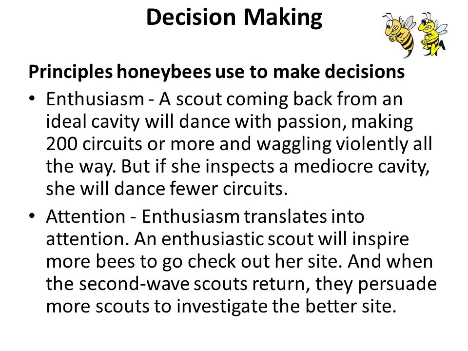 Decision Making Principles honeybees use to make decisions Enthusiasm - A scout coming back from an ideal cavity will dance with passion, making 200 circuits or more and waggling violently all the way.