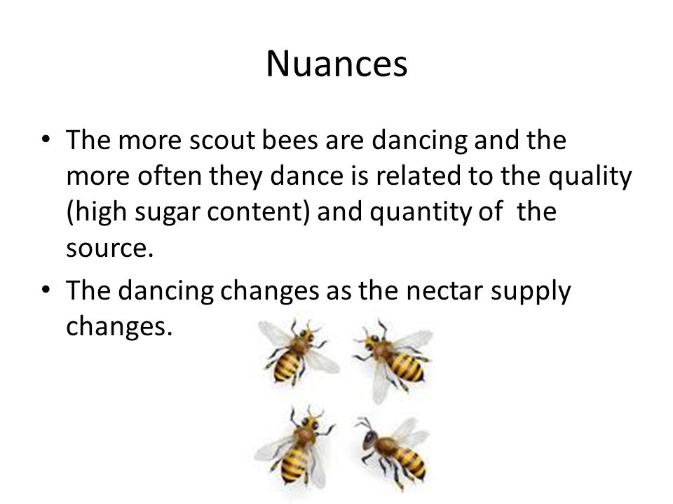 Nuances The more scout bees are dancing and the more often they dance is related to the quality (high sugar content) and quantity of the source.