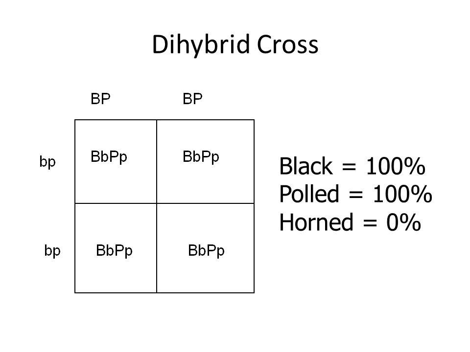 Dihybrid Cross Black = 100% Polled = 100% Horned = 0%