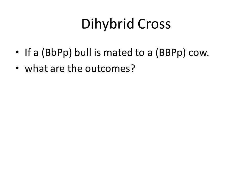 If a (BbPp) bull is mated to a (BBPp) cow. what are the outcomes?