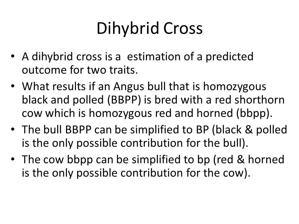 Dihybrid Cross A dihybrid cross is a estimation of a predicted outcome for two traits. What results if an Angus bull that is homozygous black and poll