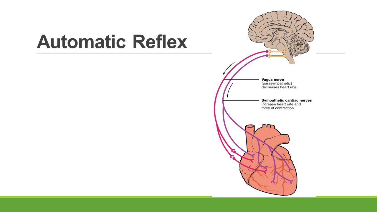 Automatic Reflex