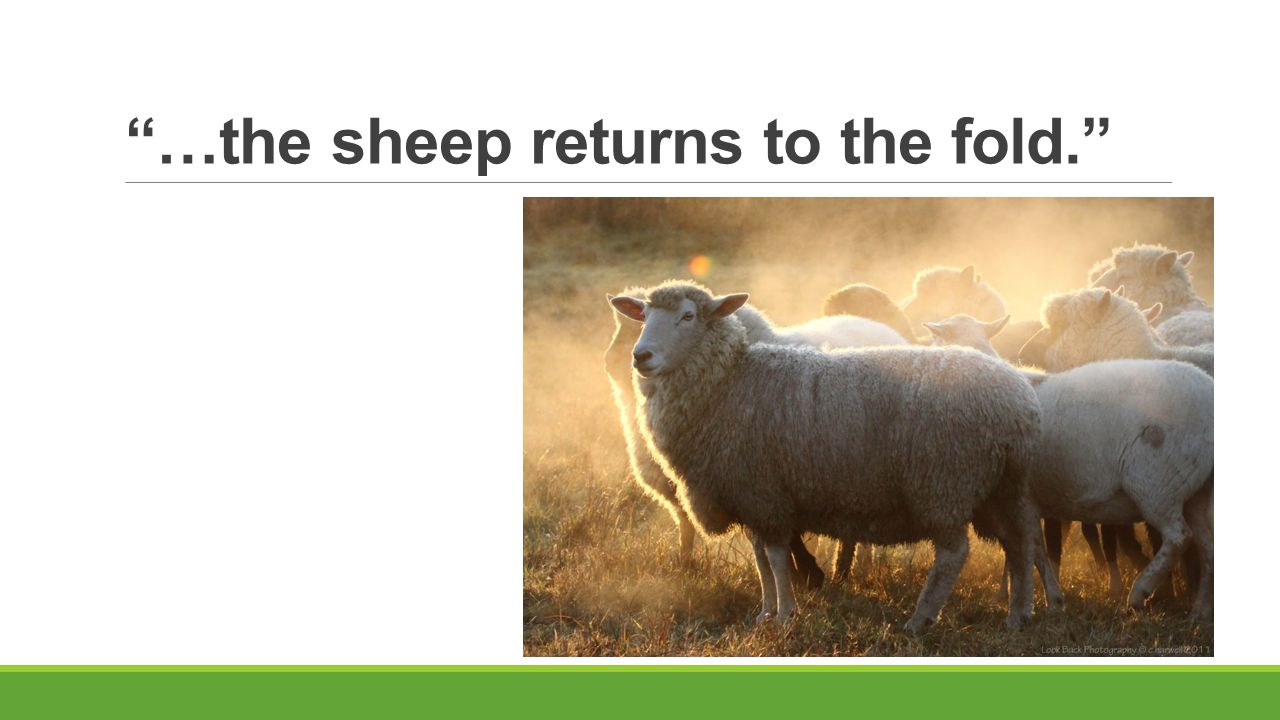 """…the sheep returns to the fold."""