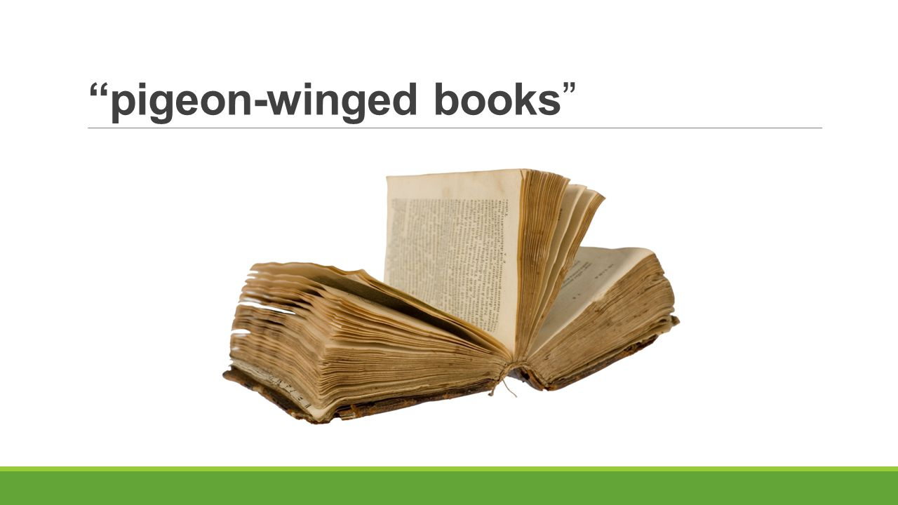 pigeon-winged books