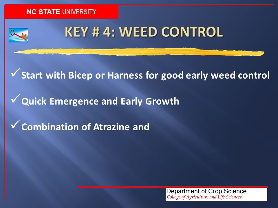 NC STATE UNIVERSITY Start with Bicep or Harness for good early weed control Quick Emergence and Early Growth Combination of Atrazine and