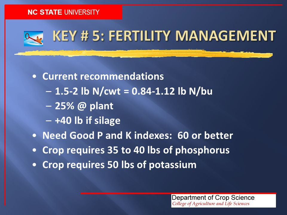 NC STATE UNIVERSITY Current recommendations –1.5-2 lb N/cwt = 0.84-1.12 lb N/bu –25% @ plant –+40 lb if silage Need Good P and K indexes: 60 or better Crop requires 35 to 40 lbs of phosphorus Crop requires 50 lbs of potassium