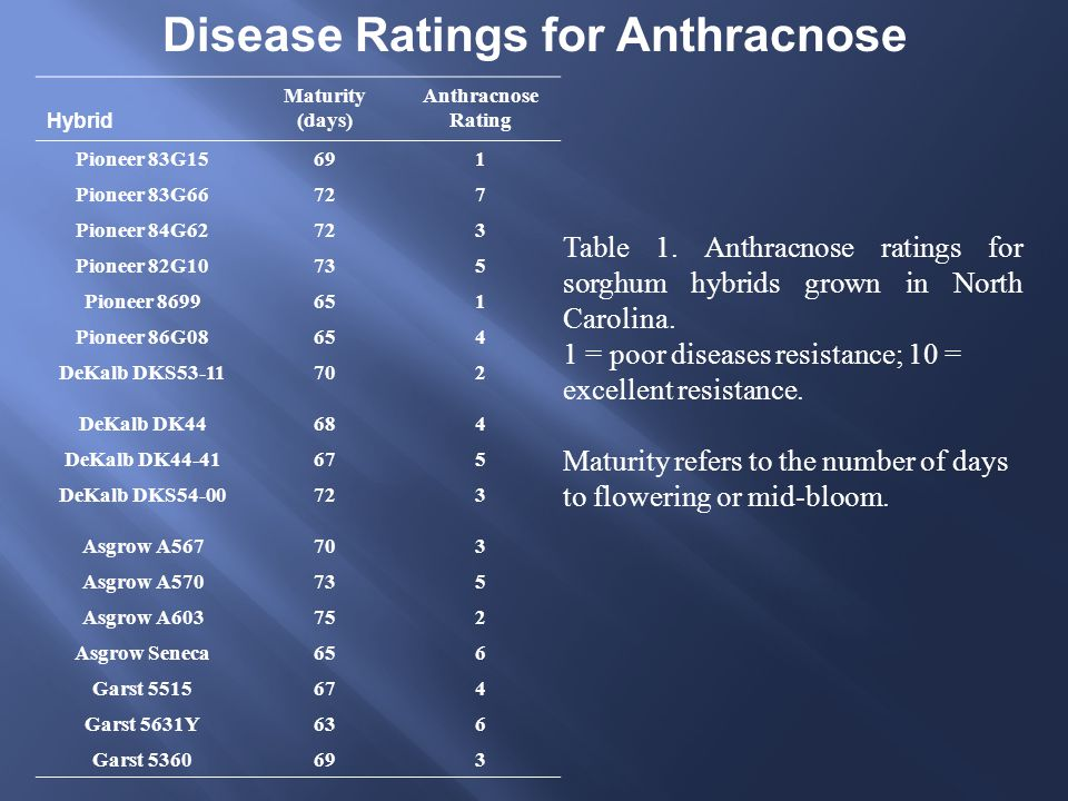 Table 1. Anthracnose ratings for sorghum hybrids grown in North Carolina.