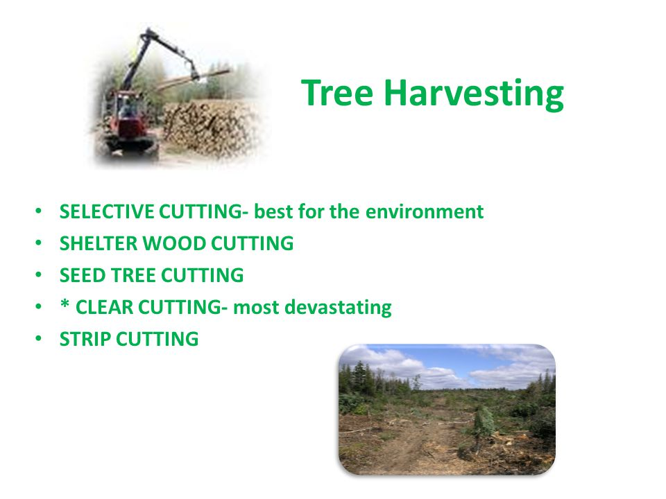 Tree Harvesting SELECTIVE CUTTING- best for the environment SHELTER WOOD CUTTING SEED TREE CUTTING * CLEAR CUTTING- most devastating STRIP CUTTING