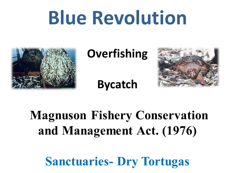 Blue Revolution Overfishing Bycatch Magnuson Fishery Conservation and Management Act.