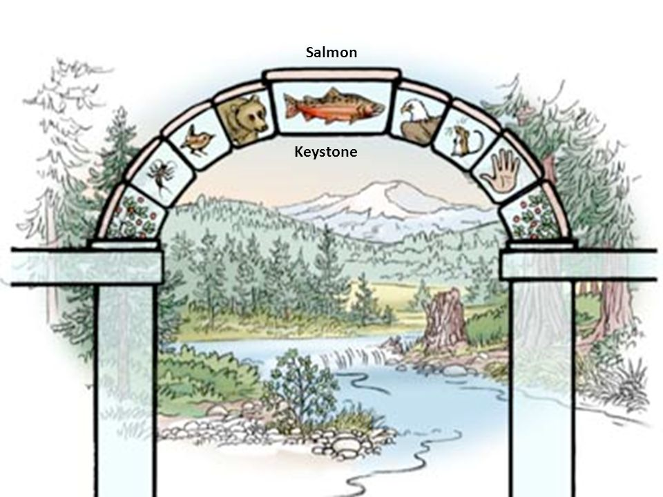 Salmon Keystone