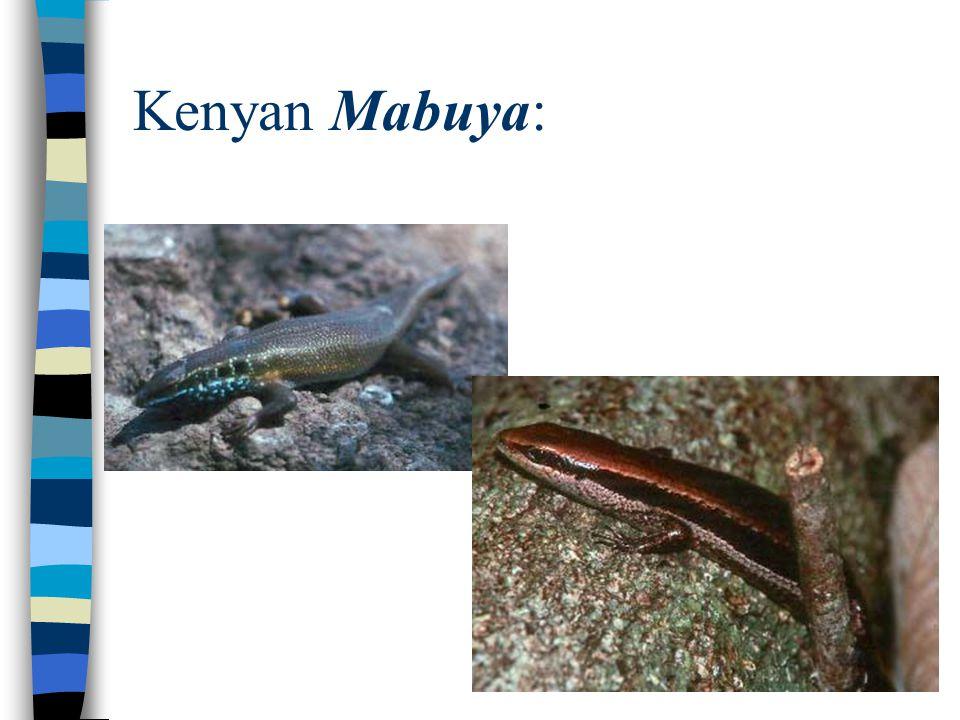 Kenyan Mabuya:
