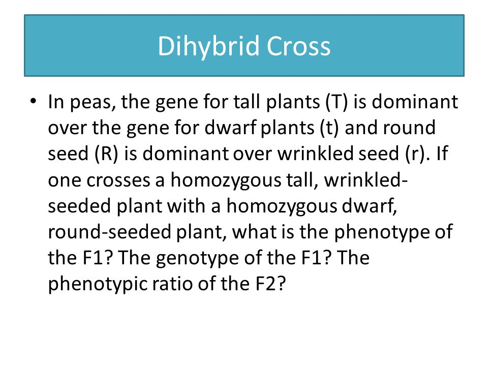 Dihybrid Cross In peas, the gene for tall plants (T) is dominant over the gene for dwarf plants (t) and round seed (R) is dominant over wrinkled seed (r).