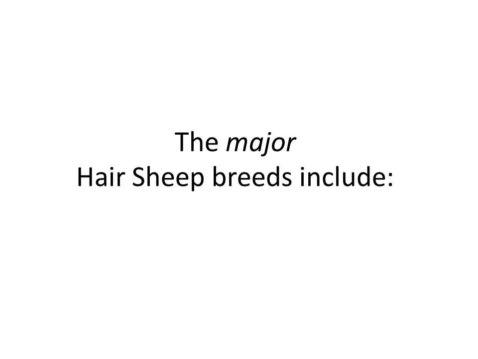 The major Hair Sheep breeds include: